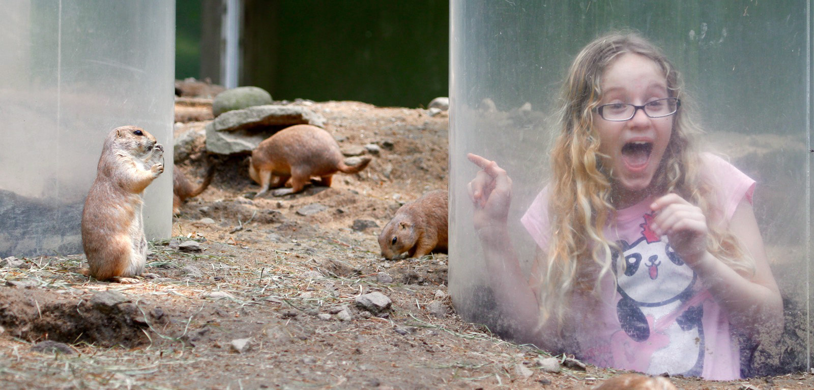 Child in Prairie Dog Tunnel surrounded by prairie dogs